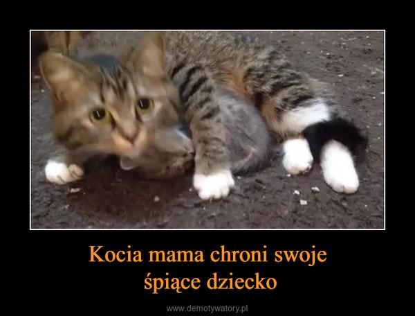 Kocia mama chroni swoje śpiące dziecko –