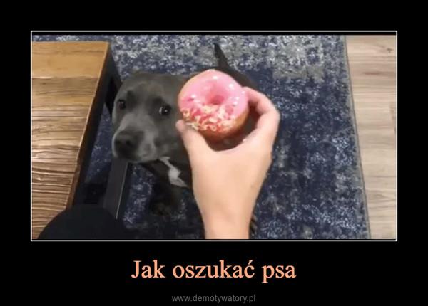 Jak oszukać psa –
