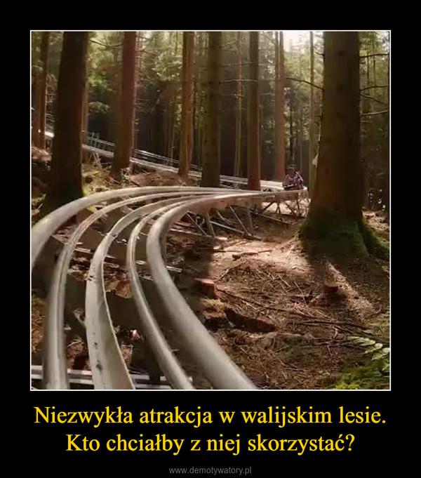 Niezwykła atrakcja w walijskim lesie. Kto chciałby z niej skorzystać? –