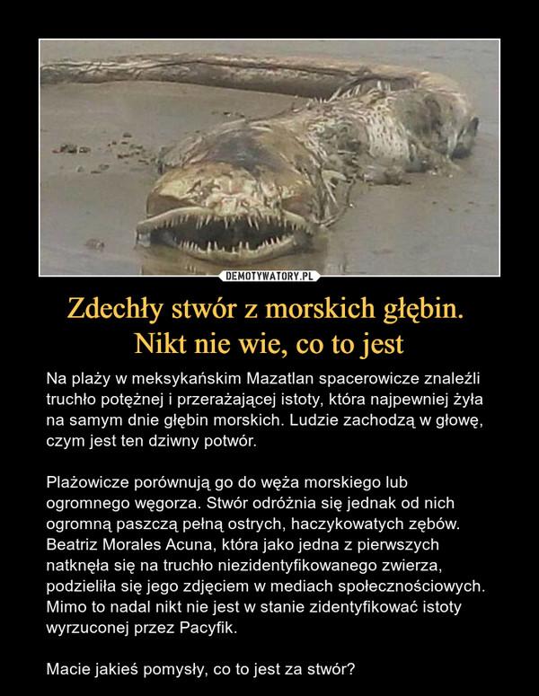 Zdechły stwór z morskich głębin. Nikt nie wie, co to jest – Na plaży w meksykańskim Mazatlan spacerowicze znaleźli truchło potężnej i przerażającej istoty, która najpewniej żyła na samym dnie głębin morskich. Ludzie zachodzą w głowę, czym jest ten dziwny potwór.Plażowicze porównują go do węża morskiego lub ogromnego węgorza. Stwór odróżnia się jednak od nich ogromną paszczą pełną ostrych, haczykowatych zębów. Beatriz Morales Acuna, która jako jedna z pierwszych natknęła się na truchło niezidentyfikowanego zwierza, podzieliła się jego zdjęciem w mediach społecznościowych. Mimo to nadal nikt nie jest w stanie zidentyfikować istoty wyrzuconej przez Pacyfik.Macie jakieś pomysły, co to jest za stwór?
