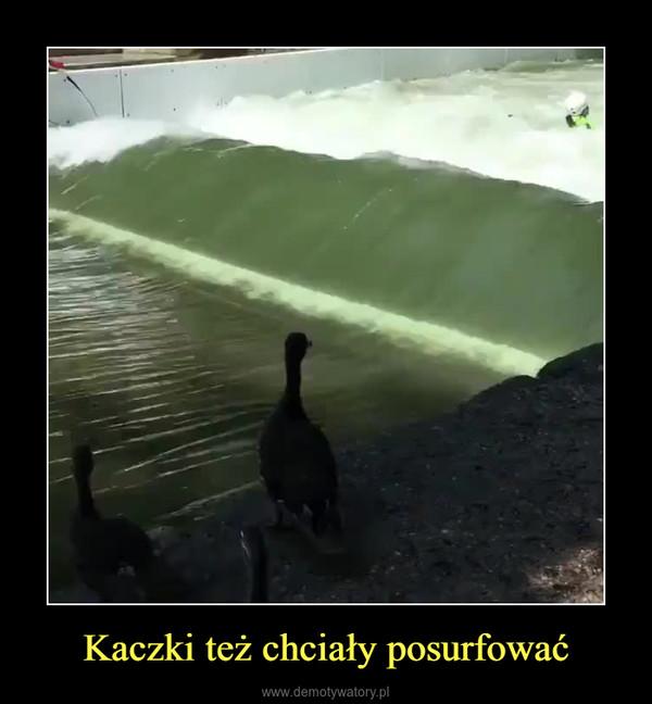 Kaczki też chciały posurfować –