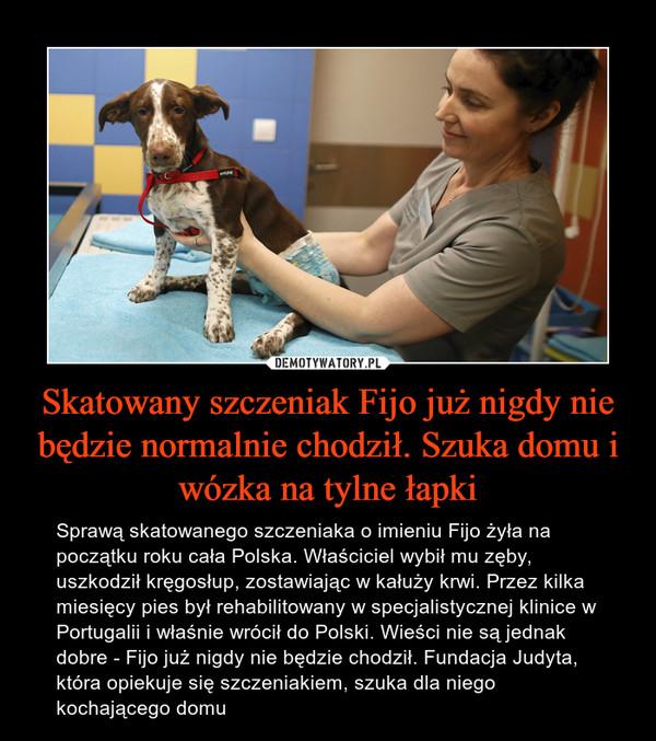 Skatowany szczeniak Fijo już nigdy nie będzie normalnie chodził. Szuka domu i wózka na tylne łapki – Sprawą skatowanego szczeniaka o imieniu Fijo żyła na początku roku cała Polska. Właściciel wybił mu zęby, uszkodził kręgosłup, zostawiając w kałuży krwi. Przez kilka miesięcy pies był rehabilitowany w specjalistycznej klinice w Portugalii i właśnie wrócił do Polski. Wieści nie są jednak dobre - Fijo już nigdy nie będzie chodził. Fundacja Judyta, która opiekuje się szczeniakiem, szuka dla niego kochającego domu