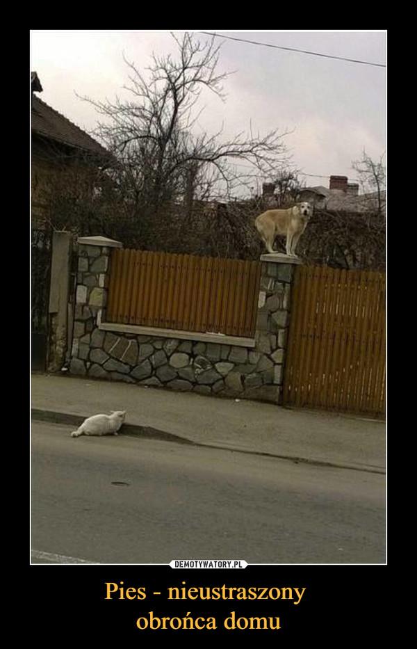 Pies - nieustraszony obrońca domu –