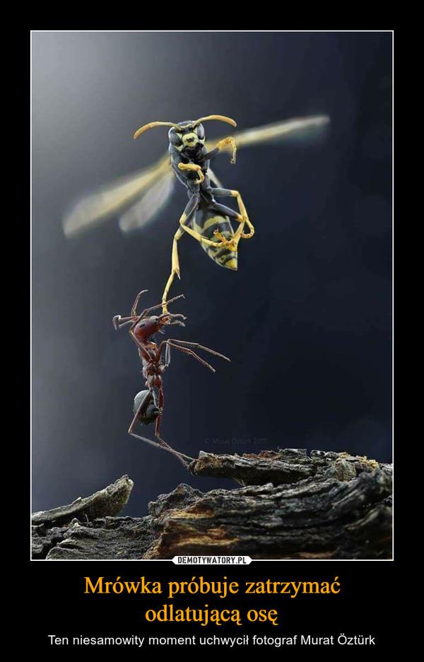 Mrówka próbuje zatrzymaćodlatującą osę – Ten niesamowity moment uchwycił fotograf Murat Öztürk
