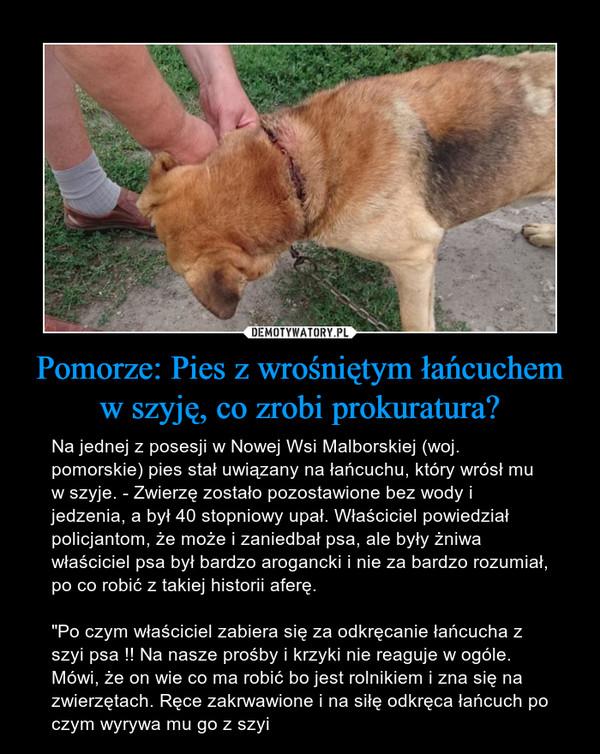 """Pomorze: Pies z wrośniętym łańcuchem w szyję, co zrobi prokuratura? – Na jednej z posesji w Nowej Wsi Malborskiej (woj. pomorskie) pies stał uwiązany na łańcuchu, który wrósł mu w szyje. - Zwierzę zostało pozostawione bez wody i jedzenia, a był 40 stopniowy upał. Właściciel powiedział policjantom, że może i zaniedbał psa, ale były żniwa właściciel psa był bardzo arogancki i nie za bardzo rozumiał, po co robić z takiej historii aferę.""""Po czym właściciel zabiera się za odkręcanie łańcucha z szyi psa !! Na nasze prośby i krzyki nie reaguje w ogóle. Mówi, że on wie co ma robić bo jest rolnikiem i zna się na zwierzętach. Ręce zakrwawione i na siłę odkręca łańcuch po czym wyrywa mu go z szyi"""