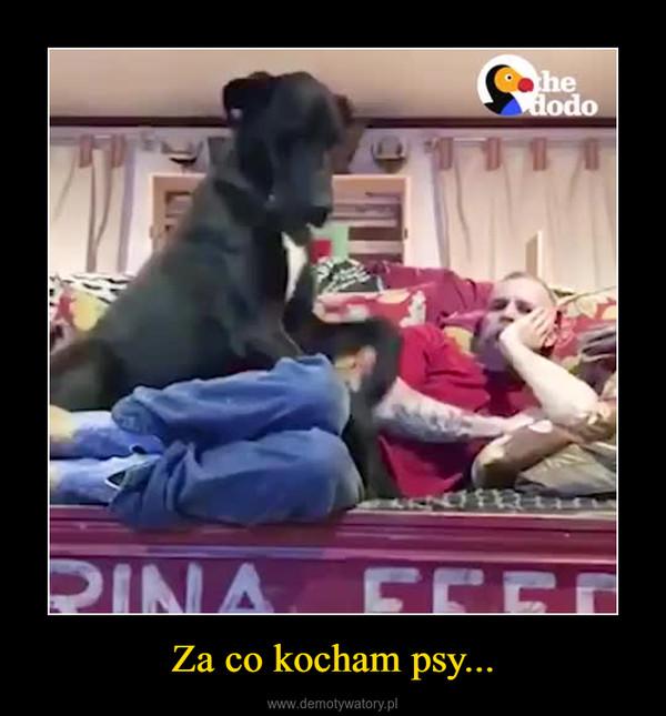 Za co kocham psy... –