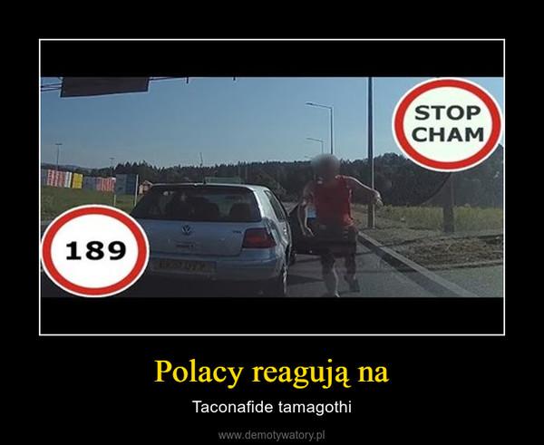Polacy reagują na – Taconafide tamagothi