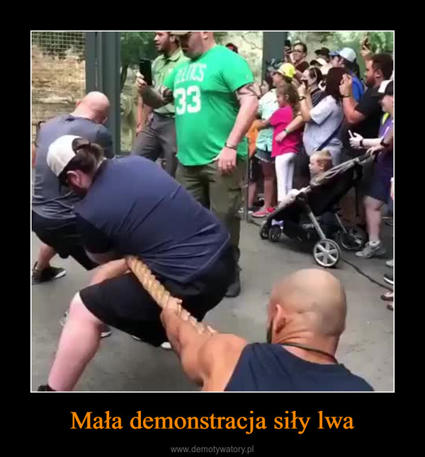 Mała demonstracja siły lwa –