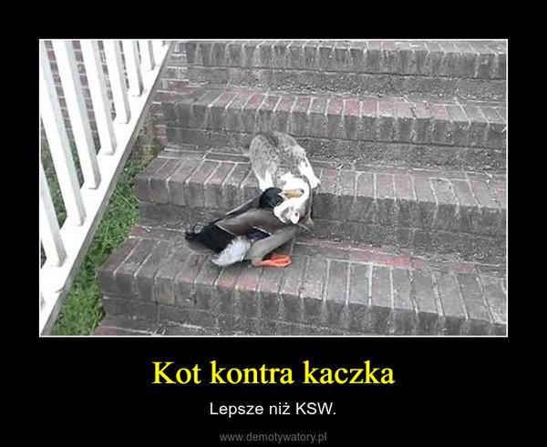 Kot kontra kaczka – Lepsze niż KSW.