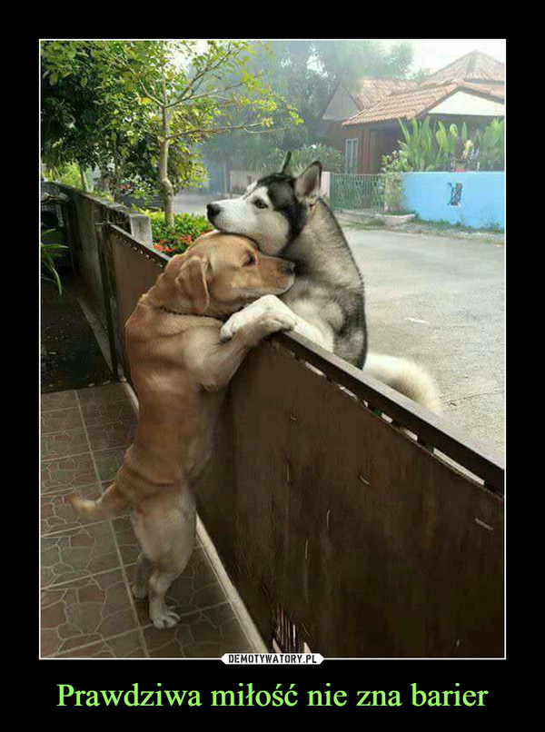 Prawdziwa miłość nie zna barier –