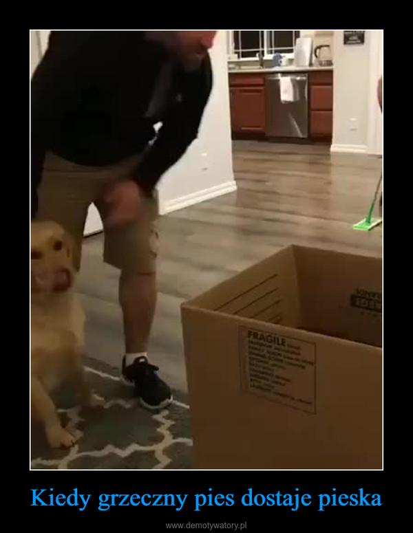Kiedy grzeczny pies dostaje pieska –