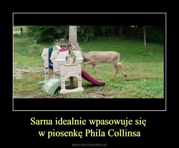 Sarna idealnie wpasowuje się w piosenkę Phila Collinsa –