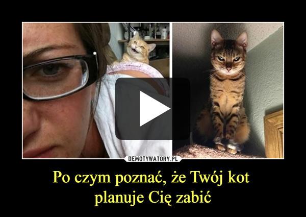 Po czym poznać, że Twój kot planuje Cię zabić –