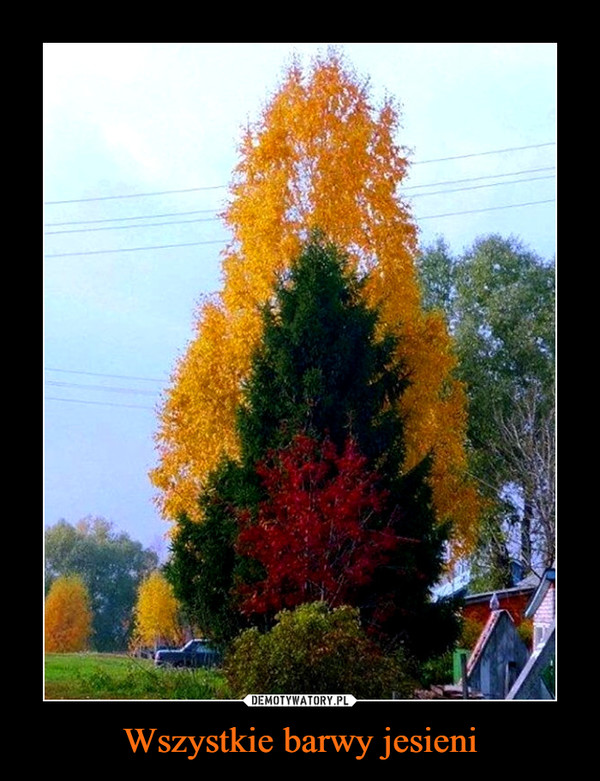Wszystkie barwy jesieni –