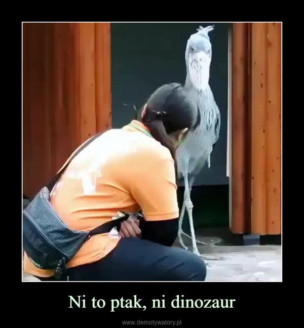 Ni to ptak, ni dinozaur –