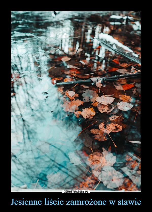 Jesienne liście zamrożone w stawie –