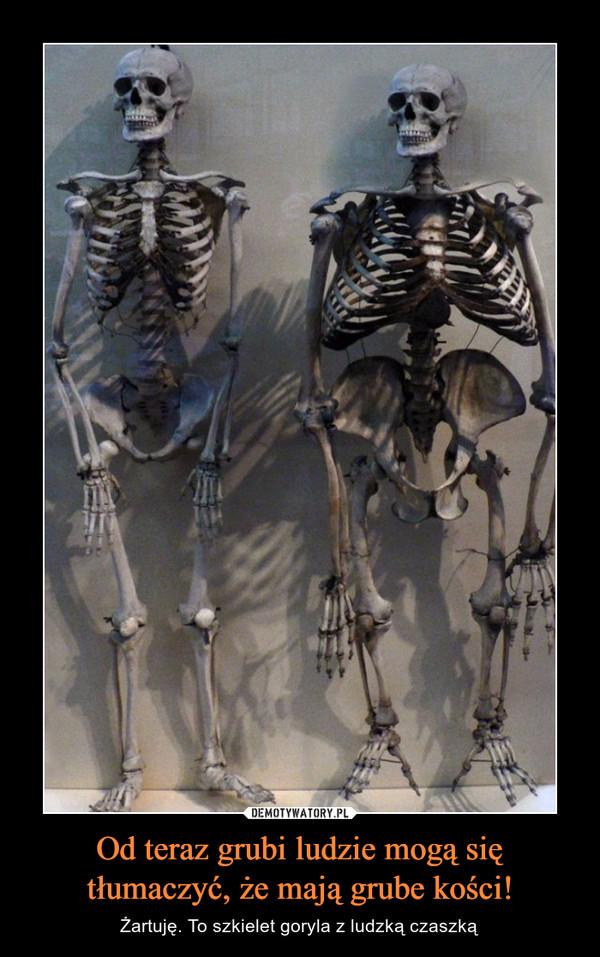 Od teraz grubi ludzie mogą się tłumaczyć, że mają grube kości! – Żartuję. To szkielet goryla z ludzką czaszką