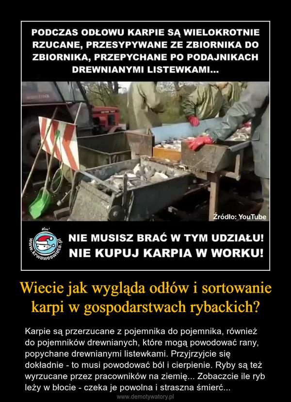 Wiecie jak wygląda odłów i sortowanie karpi w gospodarstwach rybackich? – Karpie są przerzucane z pojemnika do pojemnika, również do pojemników drewnianych, które mogą powodować rany, popychane drewnianymi listewkami. Przyjrzyjcie się dokładnie - to musi powodować ból i cierpienie. Ryby są też wyrzucane przez pracowników na ziemię... Zobaczcie ile ryb leży w błocie - czeka je powolna i straszna śmierć... PODCZAS ODŁOWU KARPIE SĄ WIELOKROTNIE RZUCANE, PRZESYPYWANE ZE ZBIORNIKA DO ZBIORNIKA, PRZEPYCHANE PO PODAJNIKACH DREWNIANYMI LISTEWKAMI... Źródło: YouTube NIE MUSISZ BRAĆ W TYM UDZIAŁU! NIE KUPUJ KARPIA W WORKU!