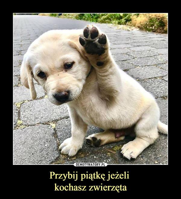 Przybij piątkę jeżeli kochasz zwierzęta –