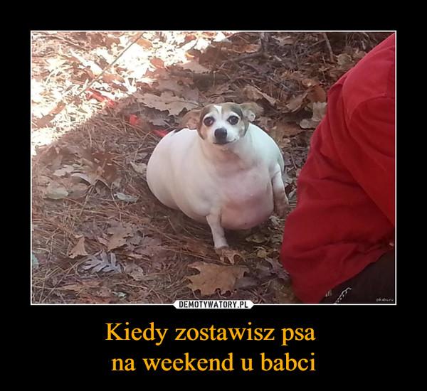 Kiedy zostawisz psa na weekend u babci –
