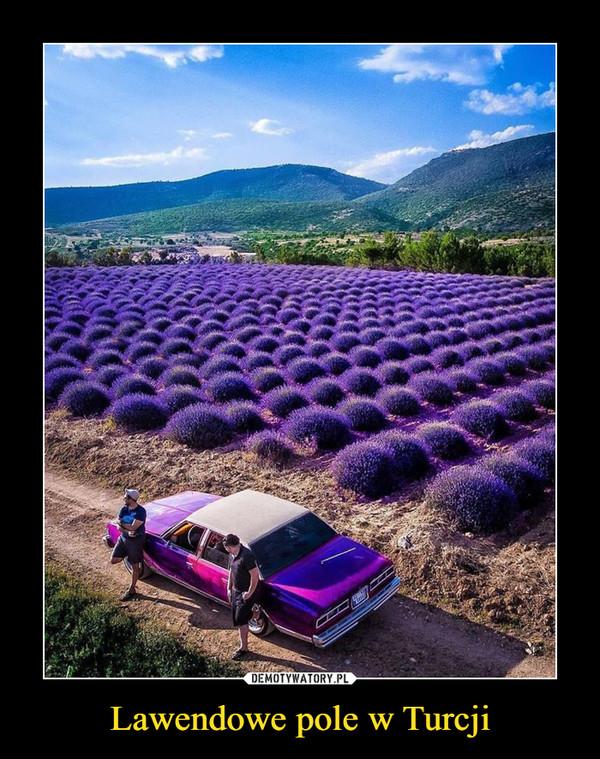 Lawendowe pole w Turcji –
