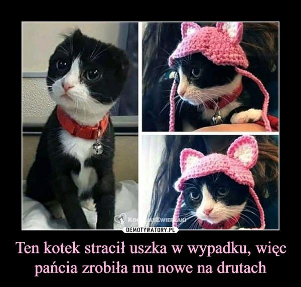Ten kotek stracił uszka w wypadku, więc pańcia zrobiła mu nowe na drutach –