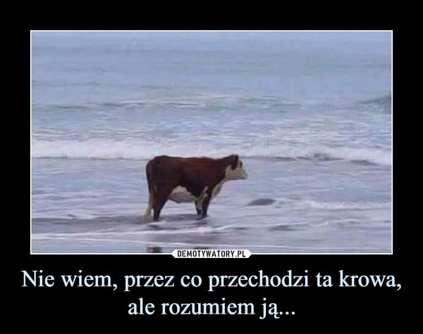 Nie wiem, przez co przechodzi ta krowa, ale rozumiem ją... –