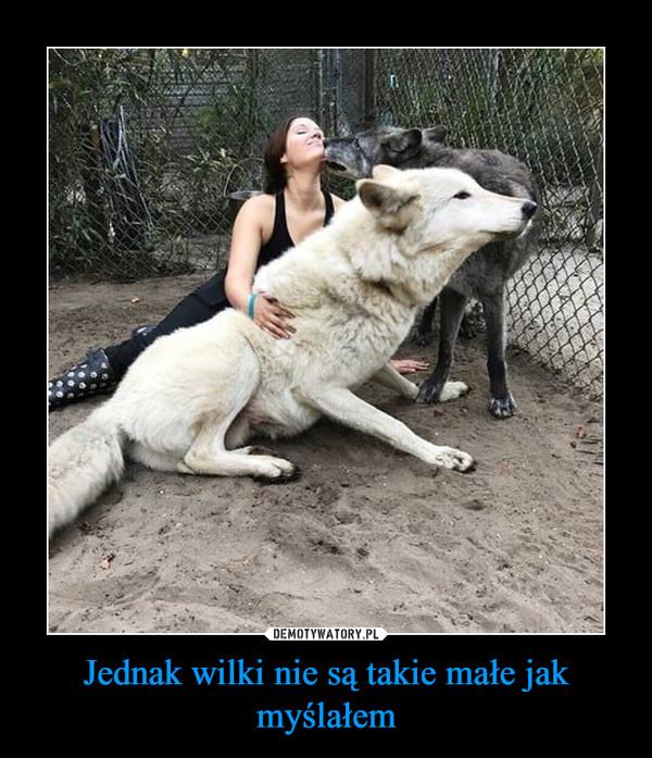 Jednak wilki nie są takie małe jak myślałem –