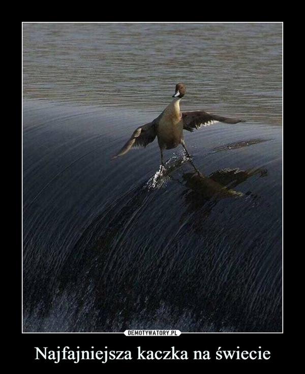 Najfajniejsza kaczka na świecie –