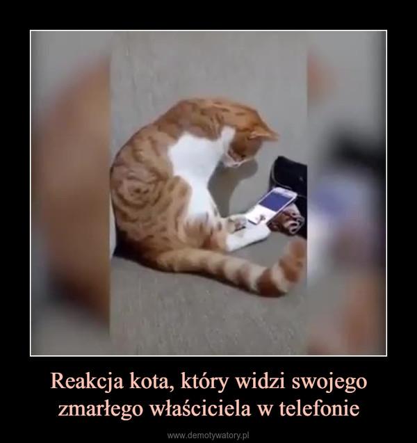 Reakcja kota, który widzi swojego zmarłego właściciela w telefonie –