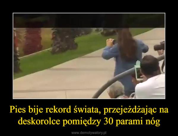 Pies bije rekord świata, przejeżdżając na deskorolce pomiędzy 30 parami nóg –