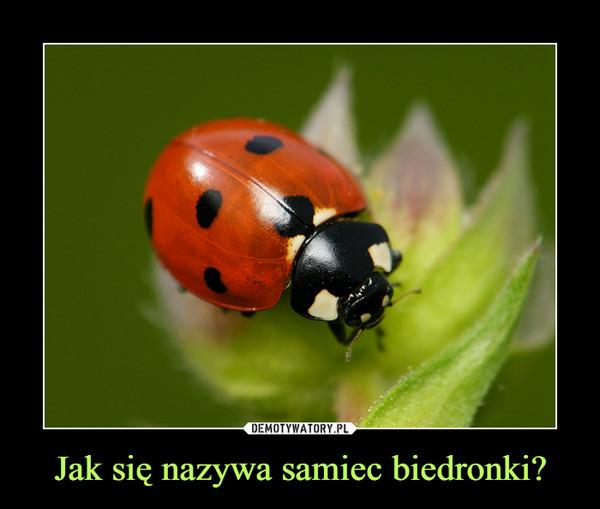 Jak się nazywa samiec biedronki? –