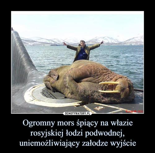 Ogromny mors śpiący na włazie rosyjskiej łodzi podwodnej, uniemożliwiający załodze wyjście