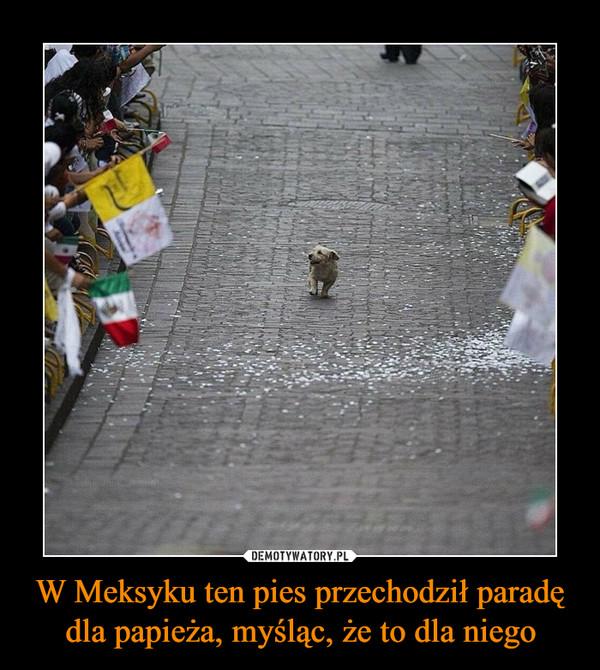 W Meksyku ten pies przechodził paradę dla papieża, myśląc, że to dla niego –