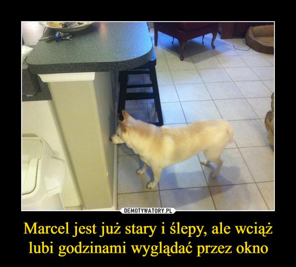 Marcel jest już stary i ślepy, ale wciąż lubi godzinami wyglądać przez okno –