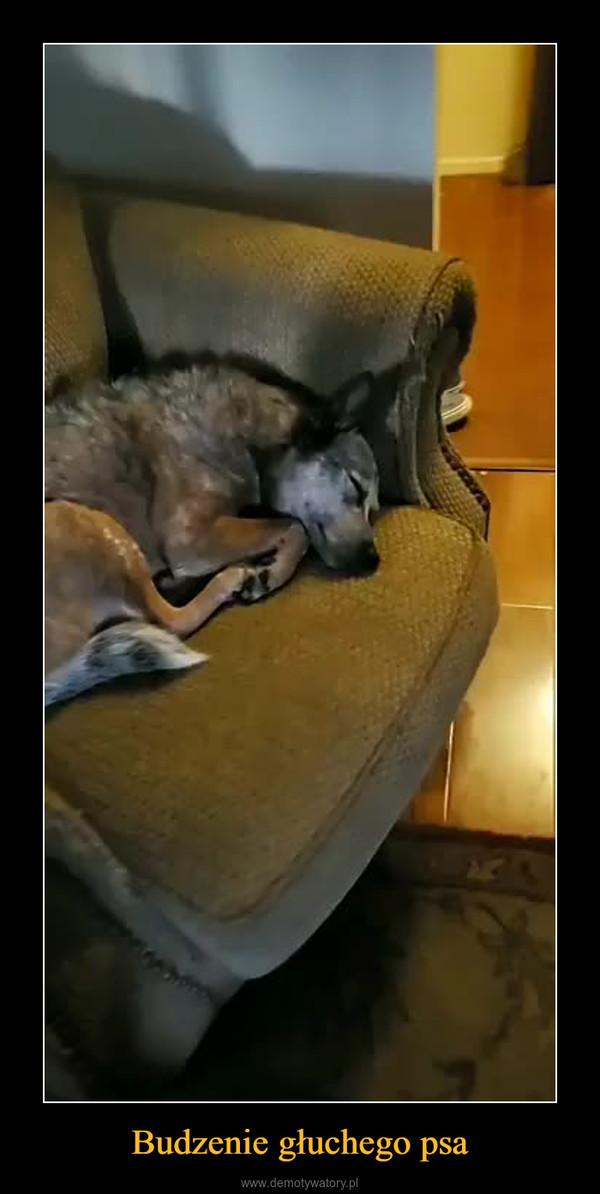Budzenie głuchego psa –