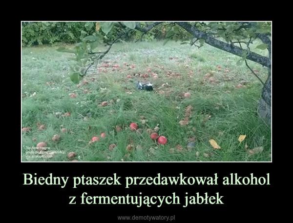 Biedny ptaszek przedawkował alkoholz fermentujących jabłek –