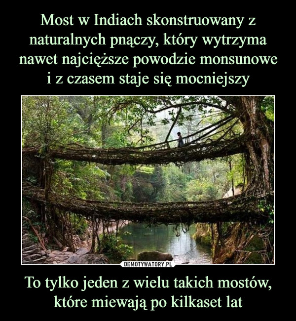 To tylko jeden z wielu takich mostów, które miewają po kilkaset lat –