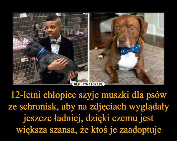 12-letni chłopiec szyje muszki dla psów ze schronisk, aby na zdjęciach wyglądały jeszcze ładniej, dzięki czemu jest większa szansa, że ktoś je zaadoptuje –