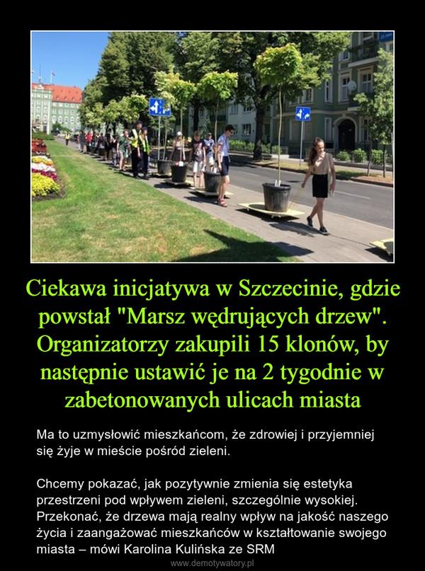 """Ciekawa inicjatywa w Szczecinie, gdzie powstał """"Marsz wędrujących drzew"""". Organizatorzy zakupili 15 klonów, by następnie ustawić je na 2 tygodnie w zabetonowanych ulicach miasta – Ma to uzmysłowić mieszkańcom, że zdrowiej i przyjemniej się żyje w mieście pośród zieleni.Chcemy pokazać, jak pozytywnie zmienia się estetyka przestrzeni pod wpływem zieleni, szczególnie wysokiej. Przekonać, że drzewa mają realny wpływ na jakość naszego życia i zaangażować mieszkańców w kształtowanie swojego miasta – mówi Karolina Kulińska ze SRM"""