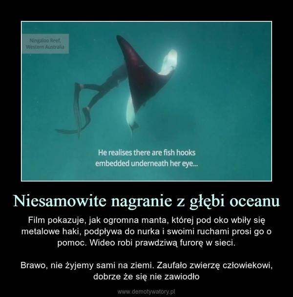 Niesamowite nagranie z głębi oceanu – Film pokazuje, jak ogromna manta, której pod oko wbiły się metalowe haki, podpływa do nurka i swoimi ruchami prosi go o pomoc. Wideo robi prawdziwą furorę w sieci.Brawo, nie żyjemy sami na ziemi. Zaufało zwierzę człowiekowi, dobrze że się nie zawiodło