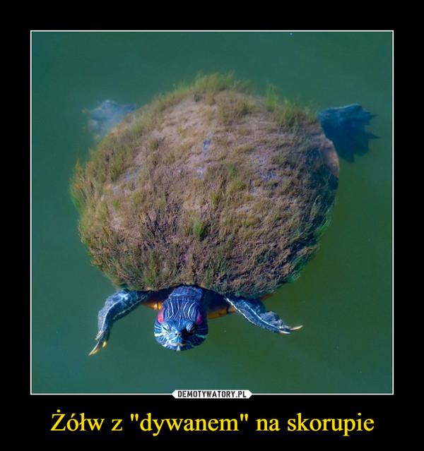 """Żółw z """"dywanem"""" na skorupie –"""