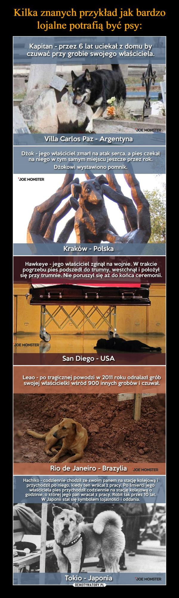 –  Kapitan - przez 6 lat uciekał z domu by czuwać przy grobie swojego właściciela. Villa Carlos Paz - Argentyna Dżok - jego właściciel zmarł na atak serca, a pies czekał na niego w tym samym miejscu jeszcze przez rok. Dżokowi wystawiono pomnik. Kraków - Polska Hawkeye - jego właściciel zginął na wojnie. W trakcie pogrzebu pies podszedł do trumny, westchnął i położył się przy trumnie. Nie poruszył się aż do końca ceremonii. • ••■•■■•■• San Diego - USA Leao - po tragicznej powodzi w 2011 roku odnalazł grób swojej właścicielki wśród 900 innych grobów i czuwał. Rio de Janeiro - Brazylia Hachiko - codziennie chodzik ze swoim panem na stację kolejową i przychodził po niego, kiedy ten wracał z pracy. Po śmierci jego właściciela pies przychodzi' codziennie na stację kolejową o godzinie, o której jego pan wracał z pracy. Robił tak przez 10 lat. W Japonii stał się symbolem lojalności i oddania. Tokio - Japonia