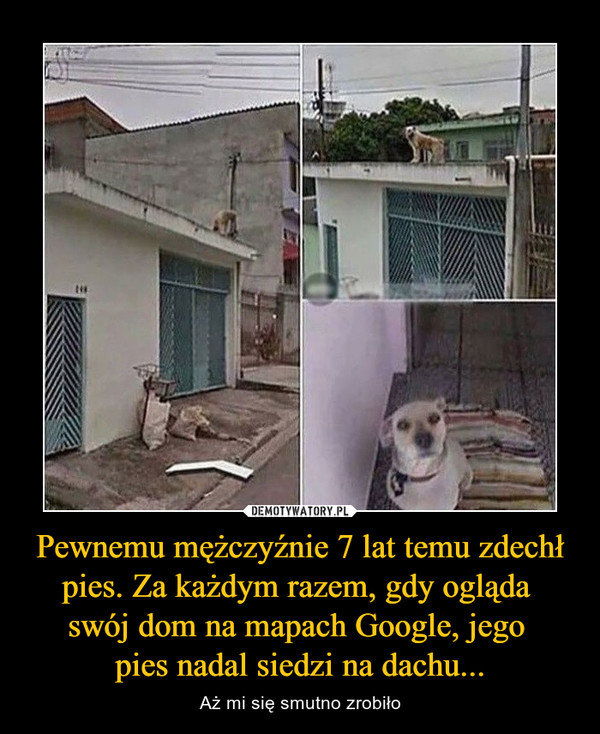 Pewnemu mężczyźnie 7 lat temu zdechł pies. Za każdym razem, gdy ogląda swój dom na mapach Google, jego pies nadal siedzi na dachu... – Aż mi się smutno zrobiło