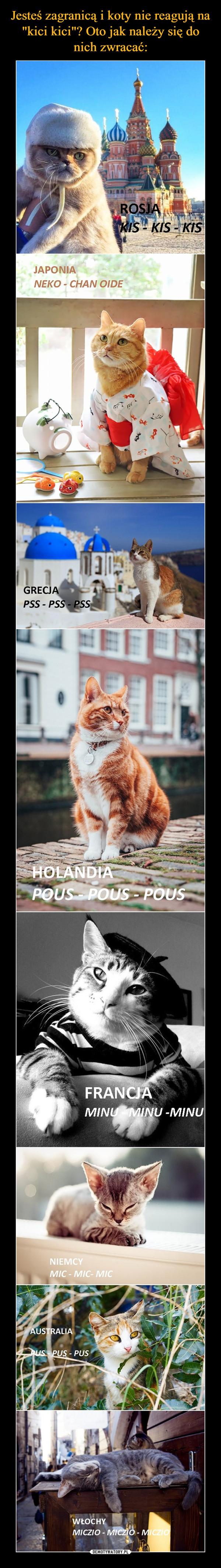 –  Rosja kis - kis - kis Japonia neko - chan oide Grecja pss pss pss Holandia Pous Pous Pous Francja minu minu minu Niemcy mic mic mic Australia pus pus pus Wlochy miczo miczo miczo