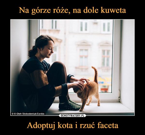 Adoptuj kota i rzuć faceta –