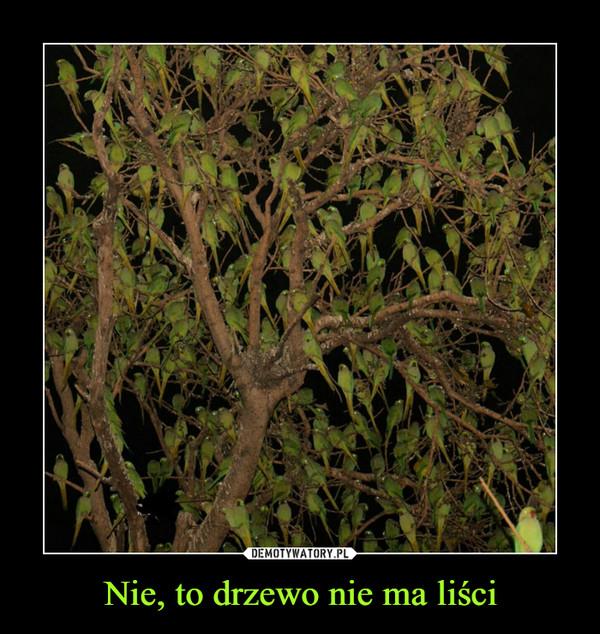 Nie, to drzewo nie ma liści –