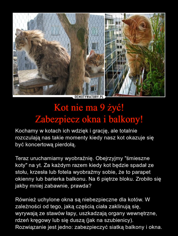 Kot nie ma 9 żyć! Zabezpiecz okna i balkony!