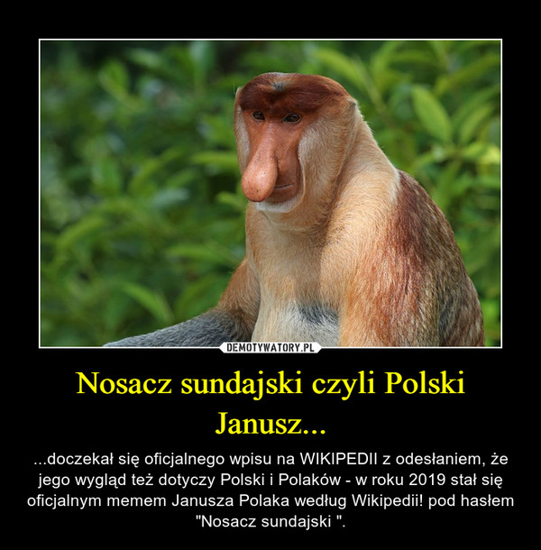 """Nosacz sundajski czyli Polski Janusz... – ...doczekał się oficjalnego wpisu na WIKIPEDII z odesłaniem, że jego wygląd też dotyczy Polski i Polaków - w roku 2019 stał się oficjalnym memem Janusza Polaka według Wikipedii! pod hasłem """"Nosacz sundajski """"."""