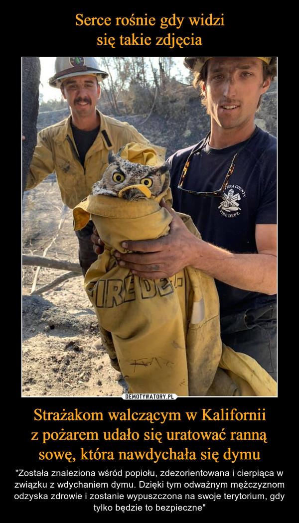 """Strażakom walczącym w Kaliforniiz pożarem udało się uratować rannąsowę, która nawdychała się dymu – """"Została znaleziona wśród popiołu, zdezorientowana i cierpiąca w związku z wdychaniem dymu. Dzięki tym odważnym mężczyznom odzyska zdrowie i zostanie wypuszczona na swoje terytorium, gdy tylko będzie to bezpieczne"""""""
